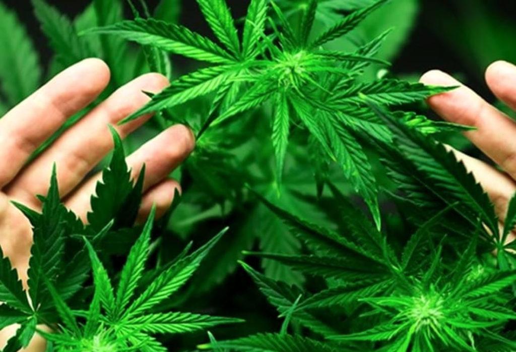 Cannabis in negozio Milano